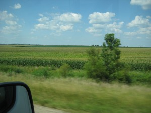 Corn fields in Illinois