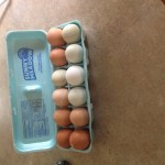 Fresh eggs from Whittington Woods Illinois